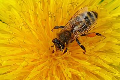Apitherapie – Kraft der Bienenprodukte