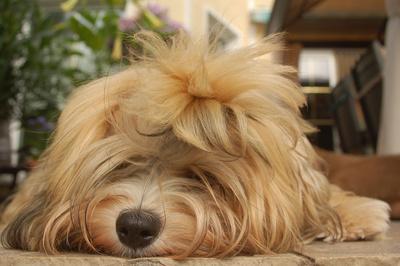 Von Stadtwölfen und Indoorhunden
