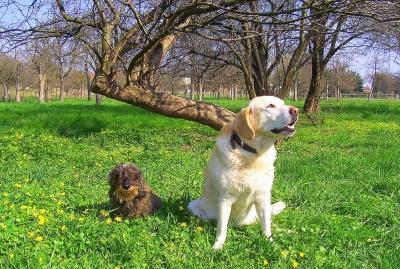 Gedanken vor dem Einzug eines Haustieres