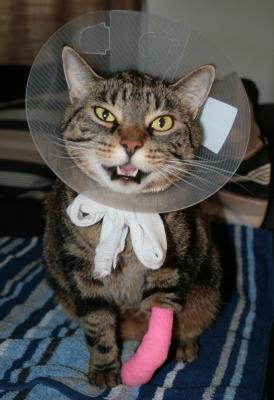 Hilfe! – Unfall mit Tier!